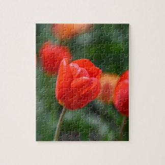 Tulipanes rojos en el jardín puzzle