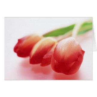 Tulipanes rojos simples toda la tarjeta de