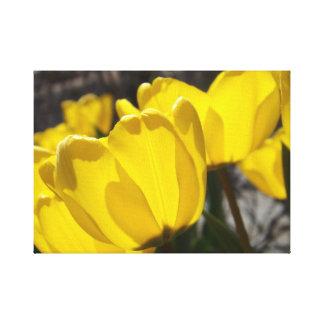 Tulipanes Sunlit Lienzo