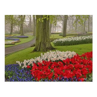 Tulipanes y narcisos jardines de Keukenhof Tarjeta Postal