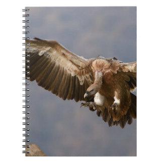 Un ave rapaz libro de apuntes