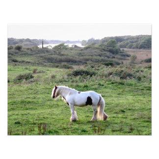 Un caballo comunicados