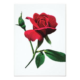 Un capullo de rosa rojo comunicados personales