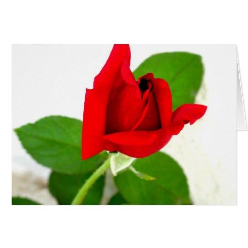 Un capullo de rosa rojo tarjeton