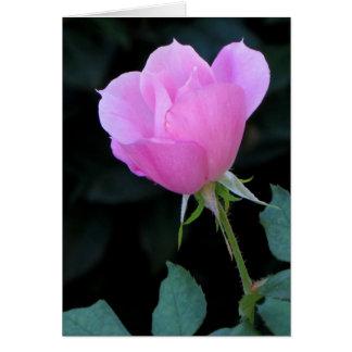 Un capullo de rosa rosado tarjeta de felicitación