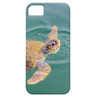 Un Caretta grande de la tortuga de mar de la Funda Para iPhone SE/5/5s