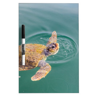 Un Caretta grande de la tortuga de mar de la Pizarra Blanca