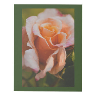 Un color de rosa debajo de la lluvia cuadro