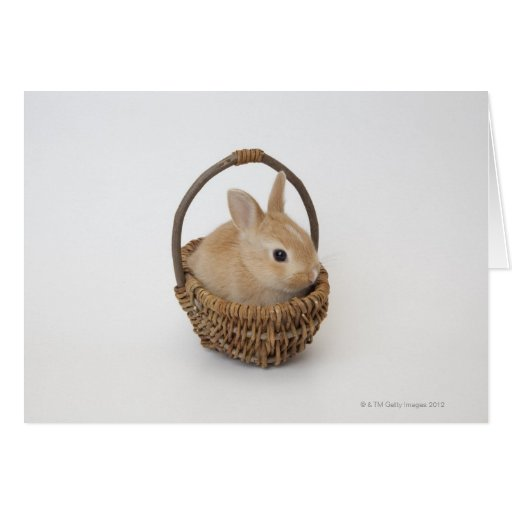 Un conejo está en una cesta. Enano de Netherland Tarjeta