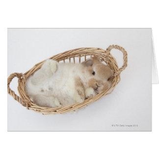 Un conejo está en una cesta. Holanda Lop. Felicitaciones