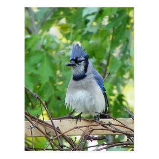 Un día del ojo de los pájaros postal