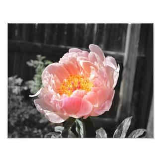 Un estallido del color impresiones fotograficas