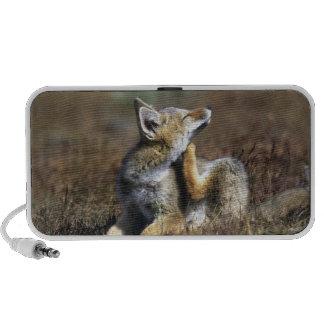 Un Fox gris joven de Argentina, (griseus del Dusic Altavoces De Viaje