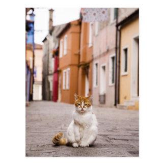 Un gato en las calles de Burano, Italia.  2006. Postal