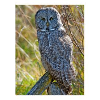 Un gran gris Owl1 del juvenal Postal