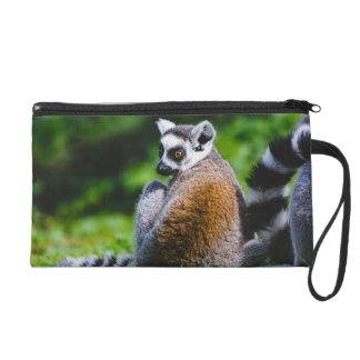 Un Lemur joven, fotografía animal