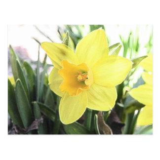 Un narciso amarillo alegre tarjeta postal