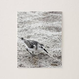 Un pájaro joven del chorlito nevado puzzle