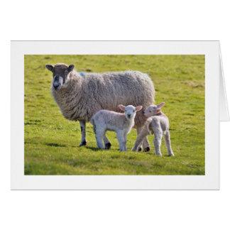 Un par lindo de corderos con su madre tarjeta de felicitación