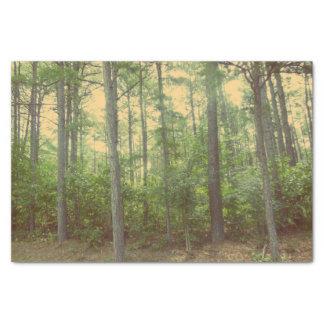 Un paseo en el papel seda de maderas