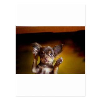 Un pequeño perro nombrado Bosse Postal