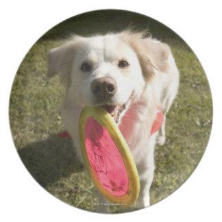 Un perro con un disco volador plato de cena