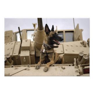 Un perro de trabajo militar se sienta en un M2A3 Foto