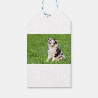 Un perro joven del sheltie que se sienta en hierba etiquetas para regalos