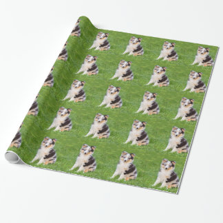 Un perro joven del sheltie que se sienta en hierba papel de regalo