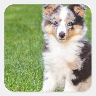 Un perro joven del sheltie que se sienta en hierba pegatina cuadrada