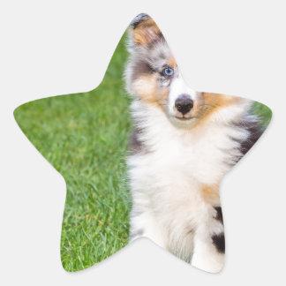 Un perro joven del sheltie que se sienta en hierba pegatina en forma de estrella