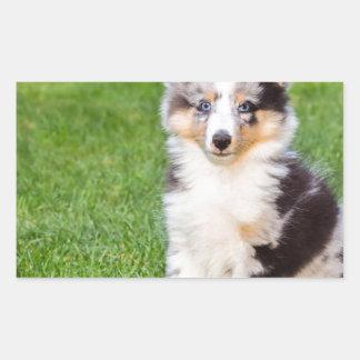 Un perro joven del sheltie que se sienta en hierba pegatina rectangular