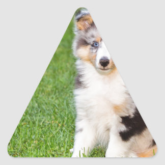 Un perro joven del sheltie que se sienta en hierba pegatina triangular