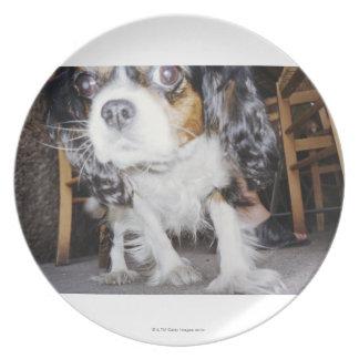 Un primer el oler del perro platos de comidas