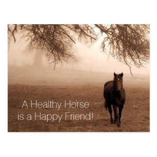 Un recordatorio veterinario de la cita del caballo postal