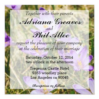 Una abeja en las flores púrpuras del azafrán, foto invitación 13,3 cm x 13,3cm