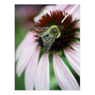 Una abeja en una margarita postal