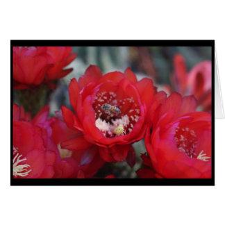 Una abeja y un cactus tarjeta de felicitación