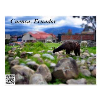 Una alpaca en Pumapungo Postal