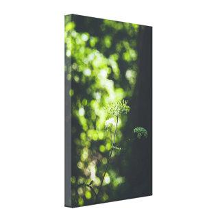 Una flor salvaje en la naturaleza verde lienzo