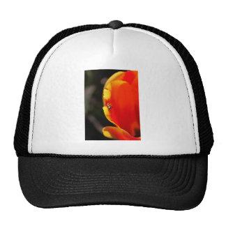 Una foto ocultada del amigo gorras