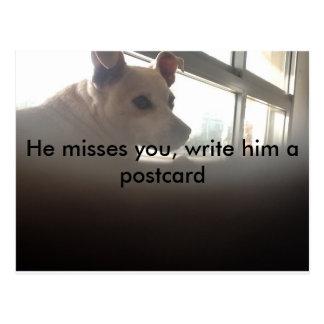 Una imagen de un perro triste. Él le falta Postal