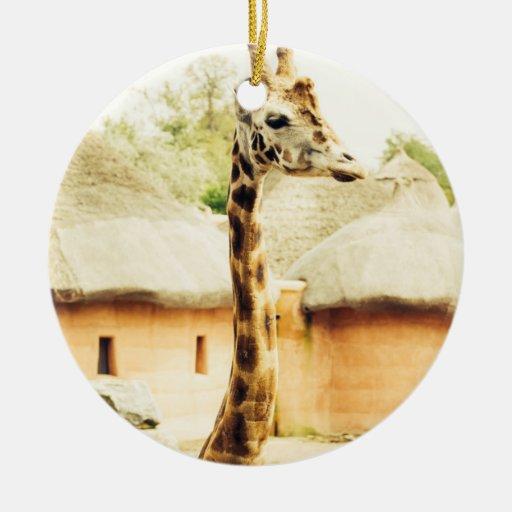 Una jirafa en un pueblo africano, fotografía ornamentos para reyes magos