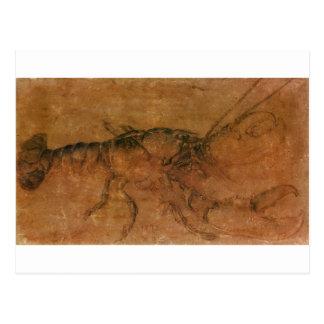Una langosta de Albrecht Durer Postal