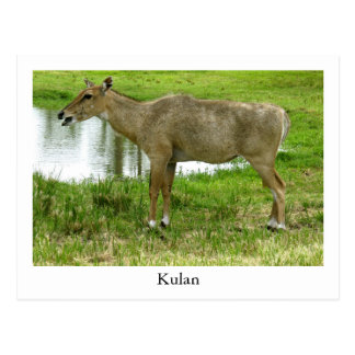 Una postal de Kulan, animales, mula, burro