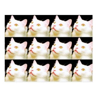 Una postal de un gato blanco, gatos, Postcrossing