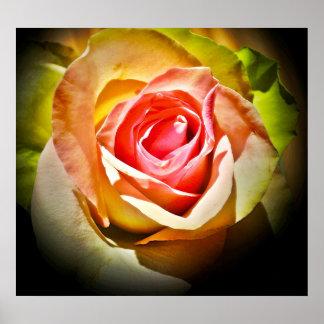 Una rosa para Él Impresiones
