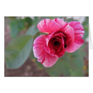Una tarjeta de nota del capullo de rosa