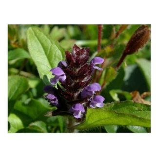 Uno mismo-cure, planta medicinal, isla de Unalaska Postal