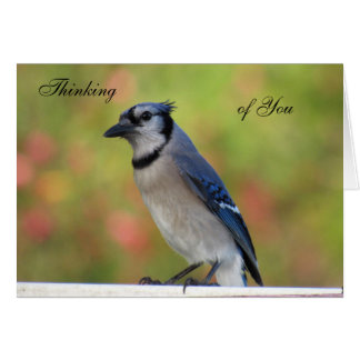 Urraca que piensa en usted tarjeta de felicitación